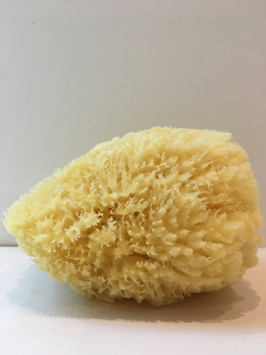 Natural Sea Sponge - shop now at be pure