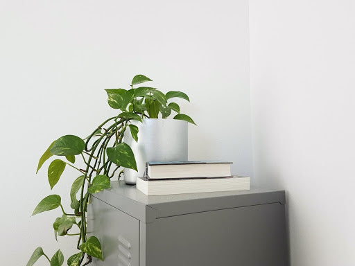 Types of Money Plants to Grow at Home
