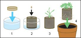 How to use Coir Seedling Coins | Root Bridges Plant Nursery | Buy Plants Online