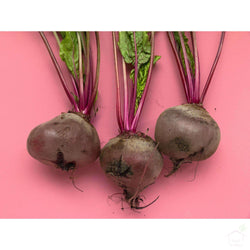 Seeds Beetroot Seeds