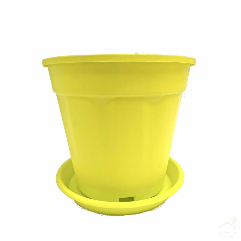 "Pots Yellow 8"" Colourful Grower Pots"