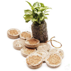 Medium Coir Seedling Coins/Jiffy Seed Starter Grow Plugs