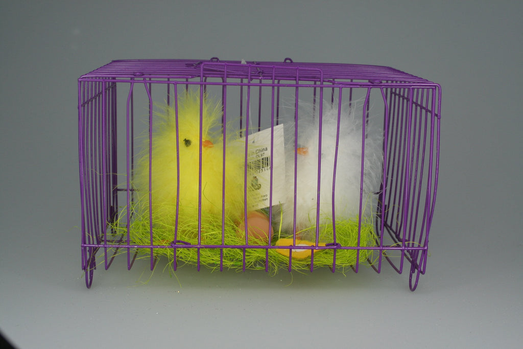 DL97 - 2 Chicks in Purple Cage