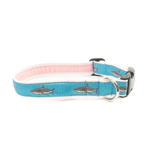 Great White Shark Dog Collar 1.25