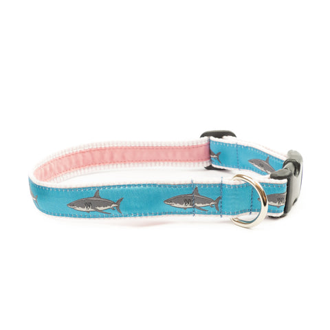 Atlantic White Shark Dog Collar 1
