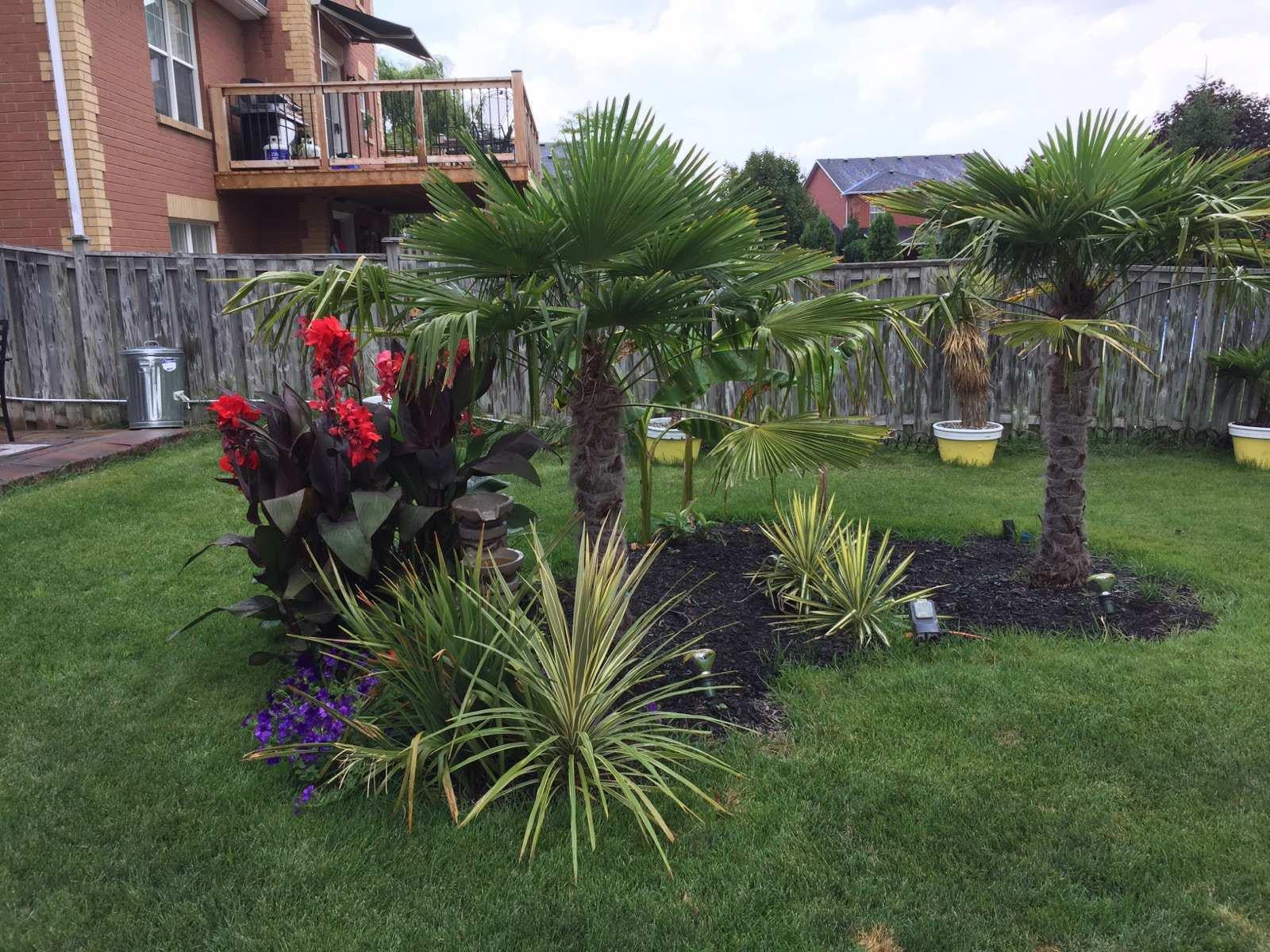 Transform you Canadian Landscape to a tropical oasis.
