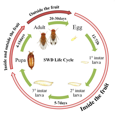 SWD Lifecycle