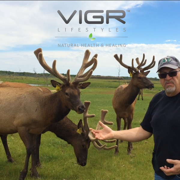 The VIGR Elk Velvet Antler Advantage: Perfect Timing