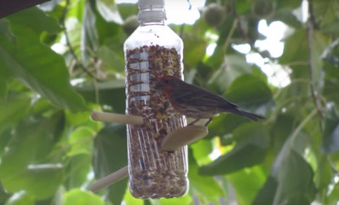 Click-A-Brick presents: How to make a bird feeder out of an empty plastic bottle