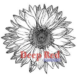 Deep Red Stamp Large Sunflower