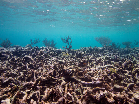 Coral Reef Damage