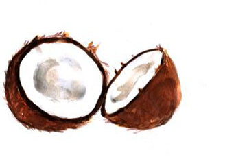 coconut in axiology product natural vegan