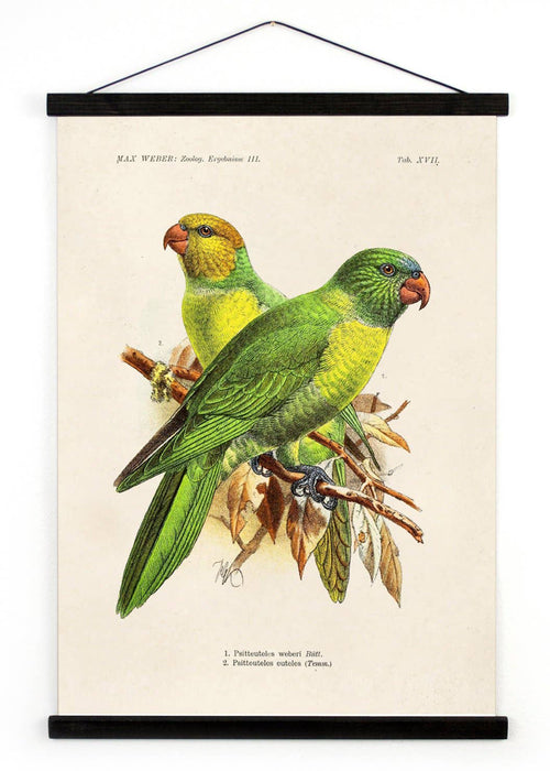 Vintage Natural History Parakeet Bird Canvas Hanging