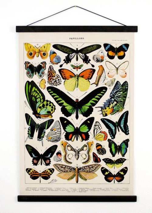 Vintage Natural History Butterfly Canvas Wall Hanging