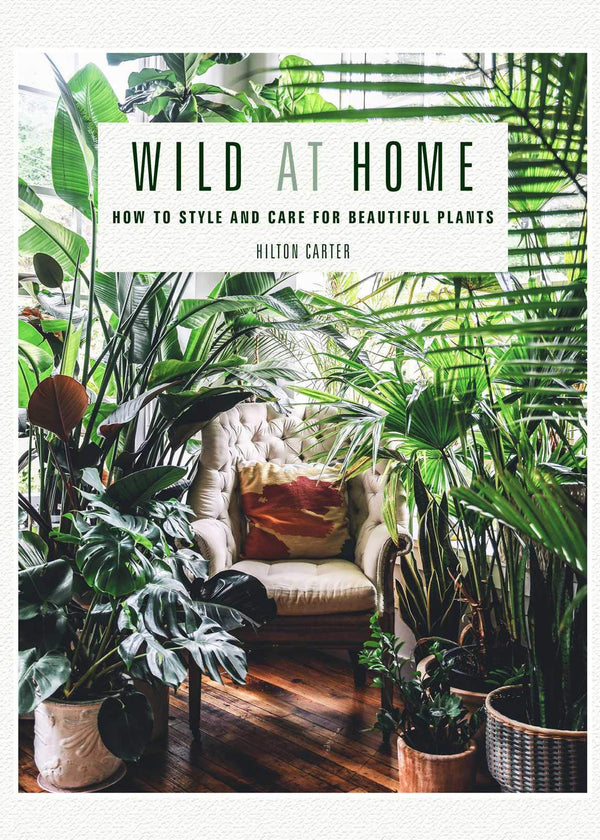 Wild At Home: How To Style & Care For Beautiful Plants