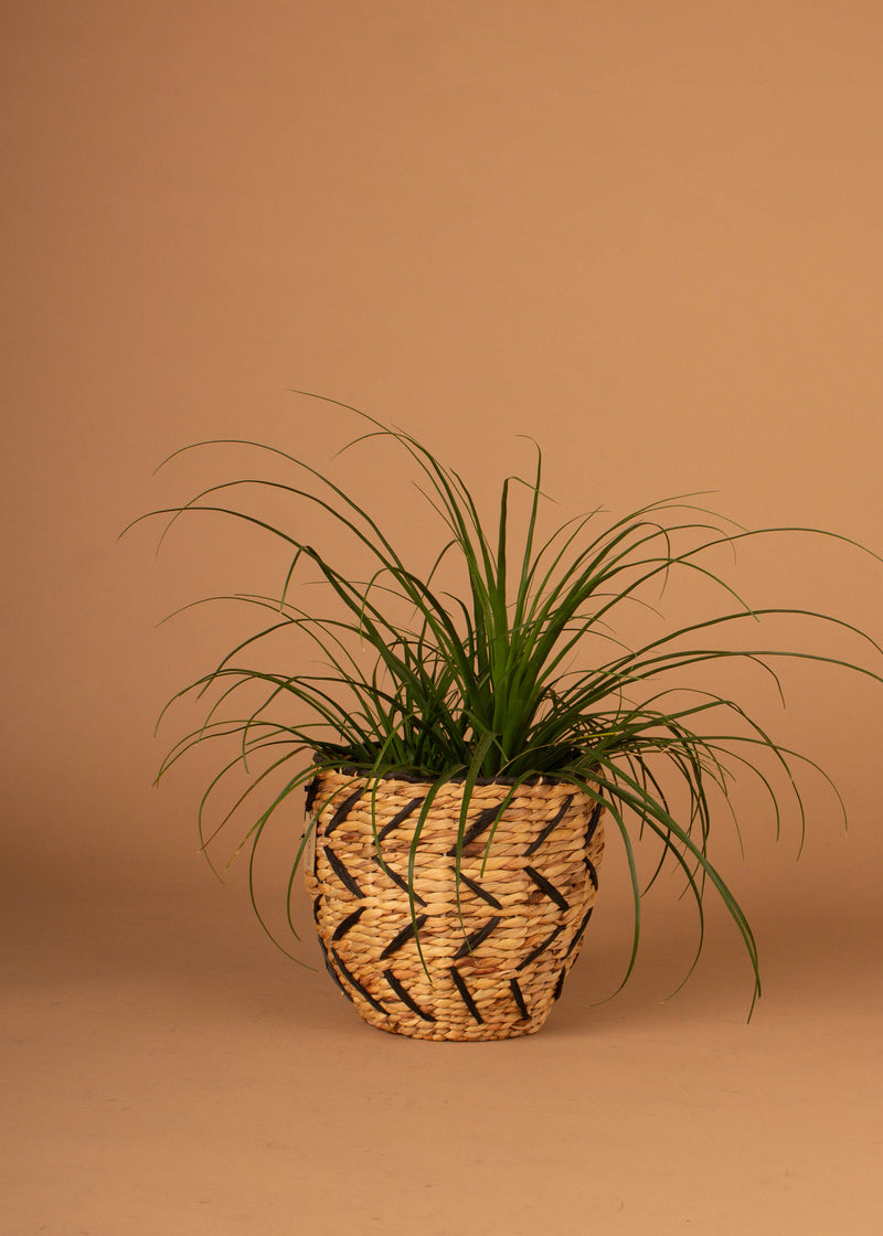 "13"" Round Woven Seagrass Basket W/ Black Detail"