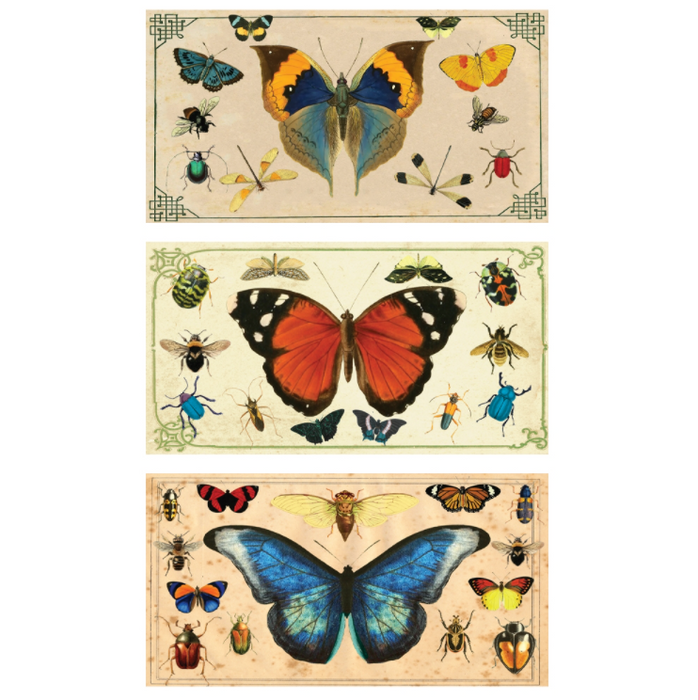 Butterfly Matches - Insect Specimens