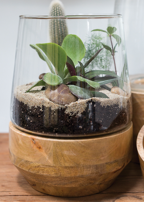 Farmhouse Terrarium