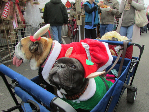 dressed up dogs - Tomball Christmas Market Pets