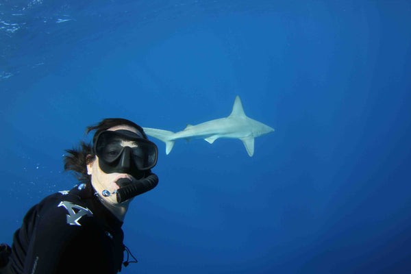 Diving with sharks Hawaii Eco Divers