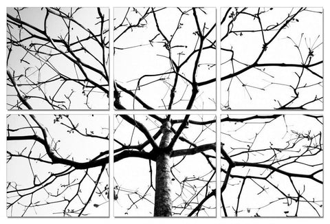 Modrest Winter Branches 6-Panel Photo