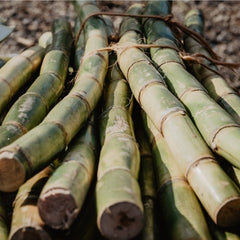 Sugar cane that is used to help formulate the DHA in our products