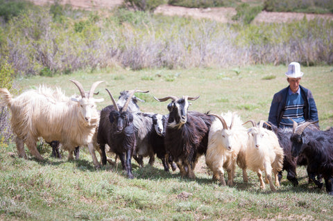 Jenglish with his herd in Kyrgyzstan