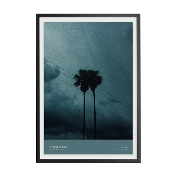 Untitled (Palm Trees) by Dario Solari