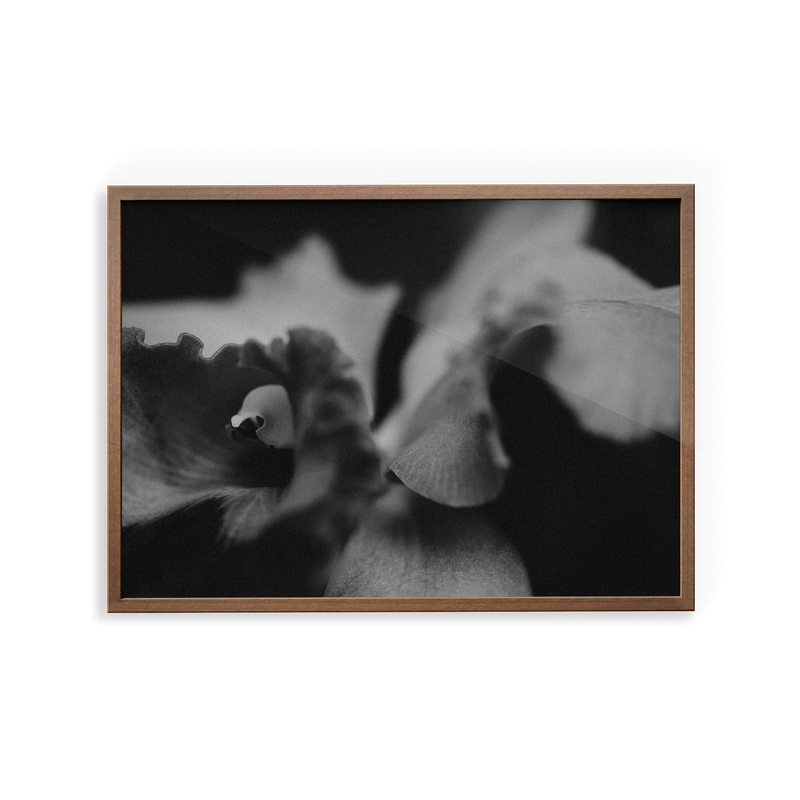 Bevard's Bloom (i) photographic print