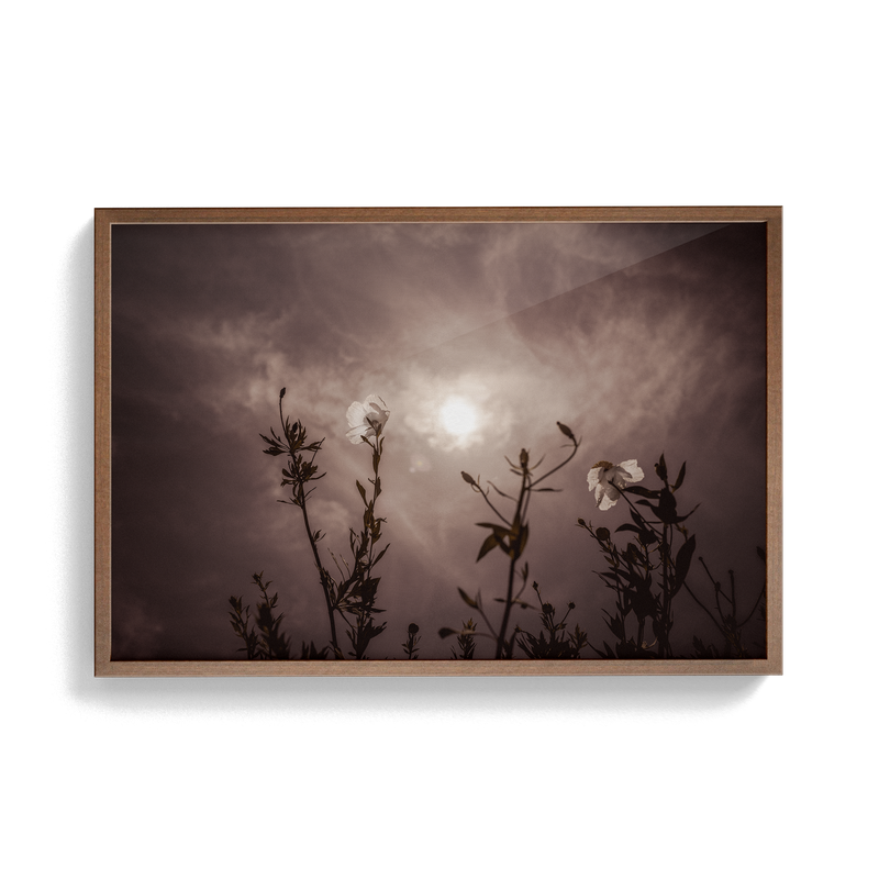 Californica (Dusk) photographic print