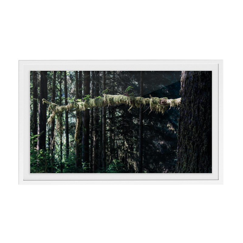 Echo Forest (xi) photographic print