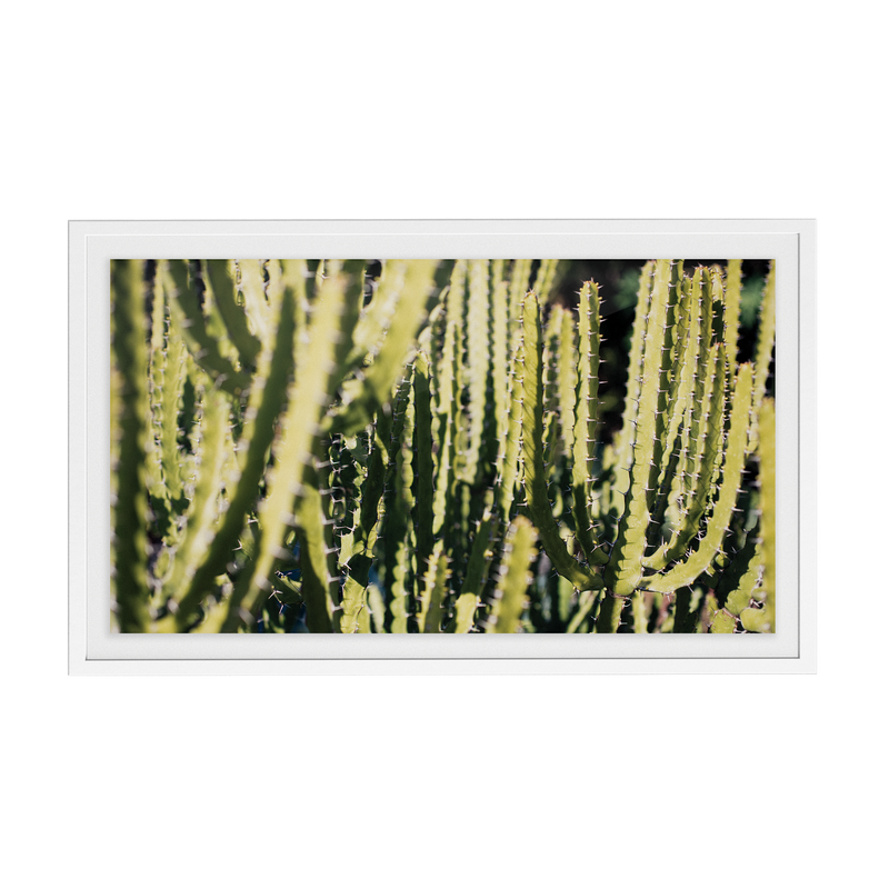 Echo Forest (xxi) photographic print