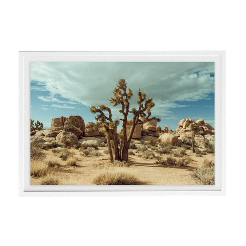 Falken Flats (01, Joshua Tree) photographic print