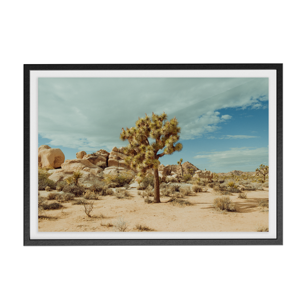 Falken Flats (02, Joshua Tree) photographic print