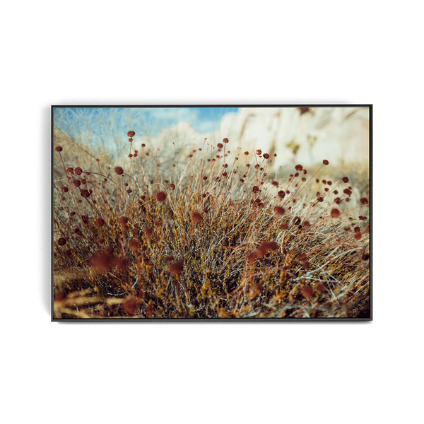 Falken Flats (03, Joshua Tree) photographic print