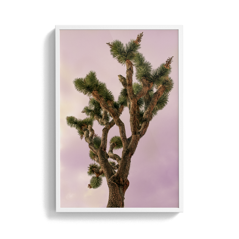 Falken Flats (04, Joshua Tree) photographic print