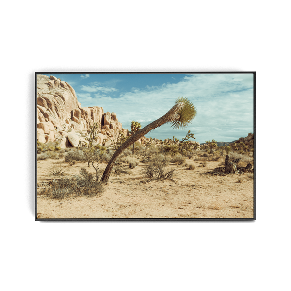 Falken Flats (05, Joshua Tree) photographic print
