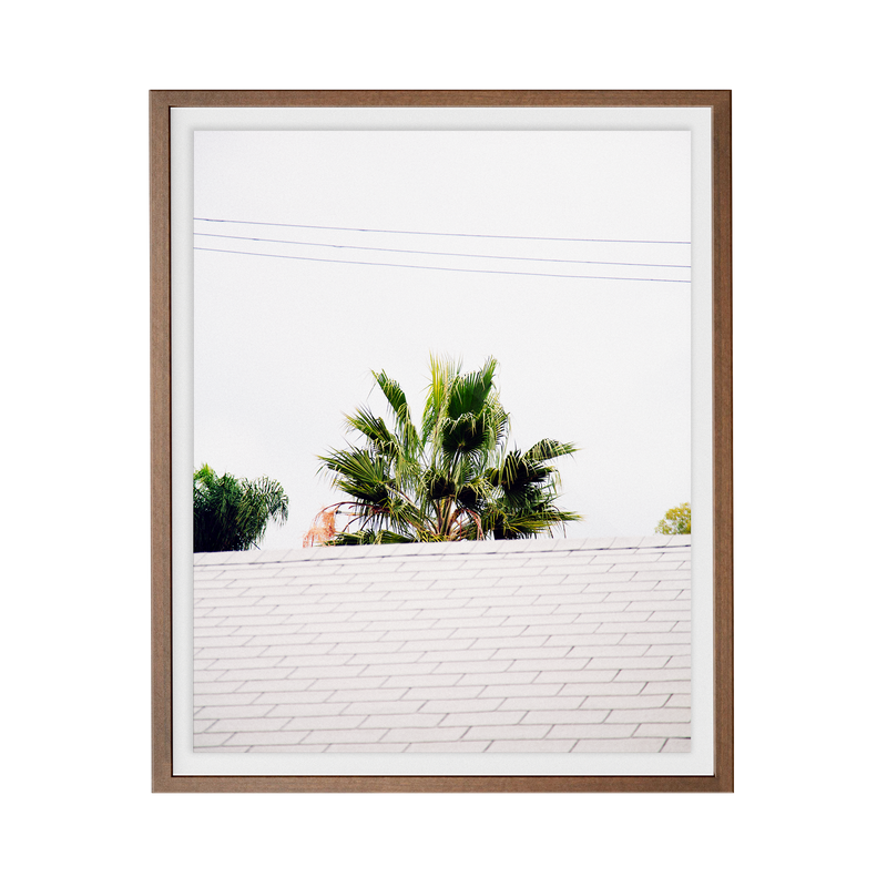 Palm Roof photographic print