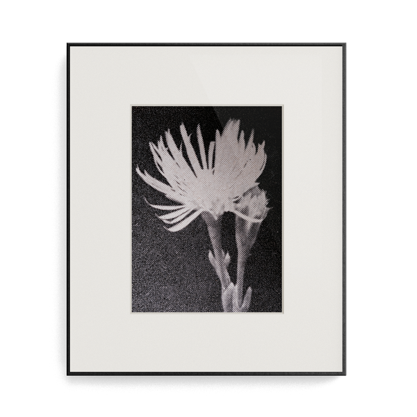 Suite Exotica Osmium (No. 1) photo print