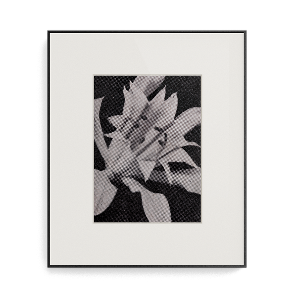 Suite Exotica Osmium (No. 2) photo print