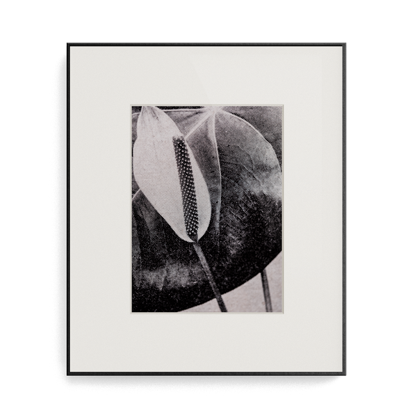 Suite Exotica Osmium (No. 4) photo print