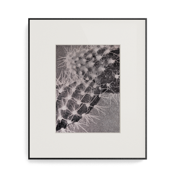 Suite Exotica Osmium (No. 5) photo print