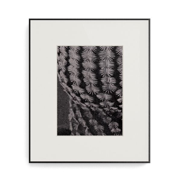 Suite Exotica Osmium (No. 6) photo print