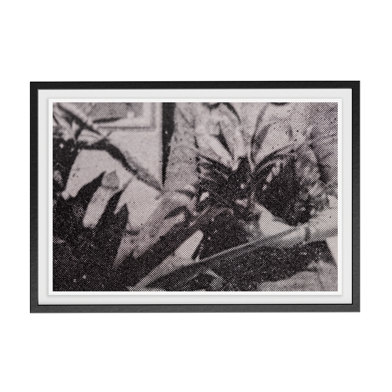 Suite Exotica Nova (No. 5) photographic print