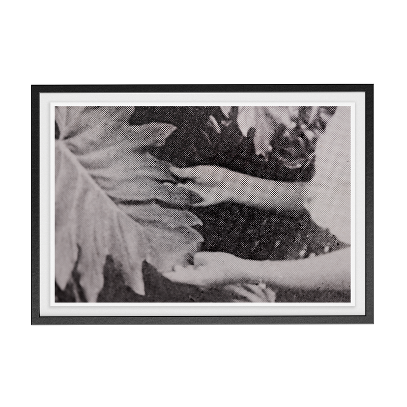 Suite Exotica Nova (No. 7) photographic print
