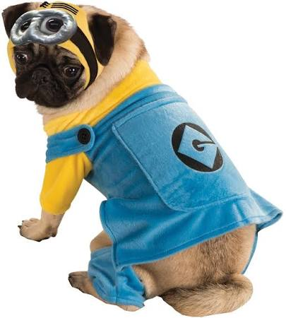 Minion Pet Costume, Despicable Me - Nevermore Costumes