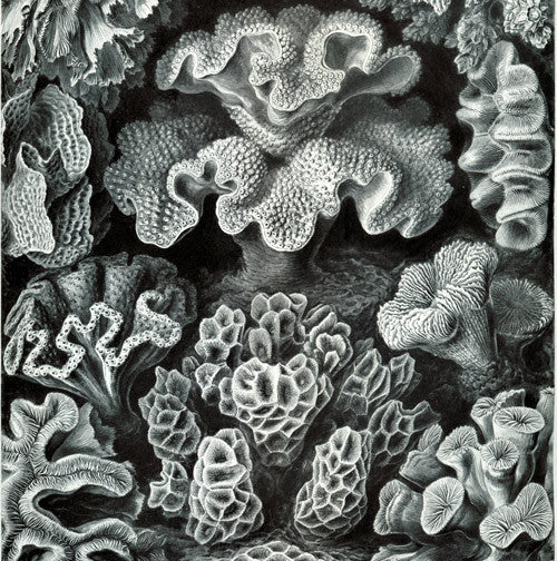 Haeckel, the Scientist as an Artist