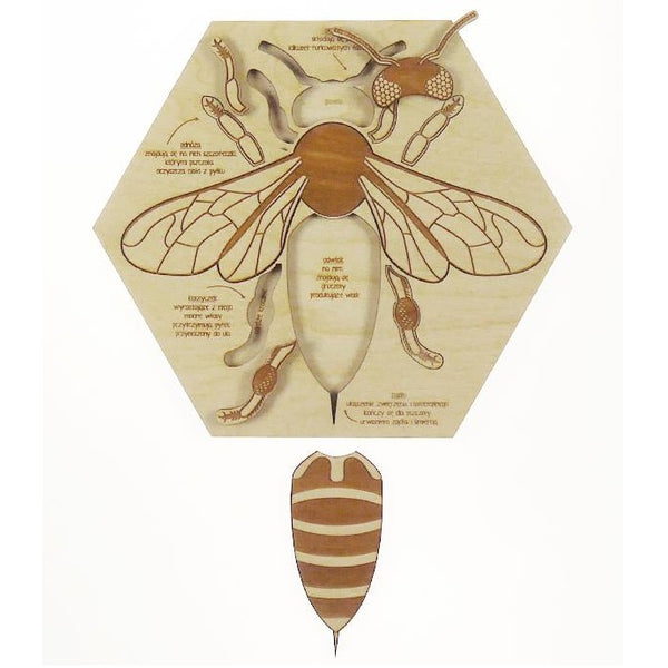 busy bee - anatomy puzzle