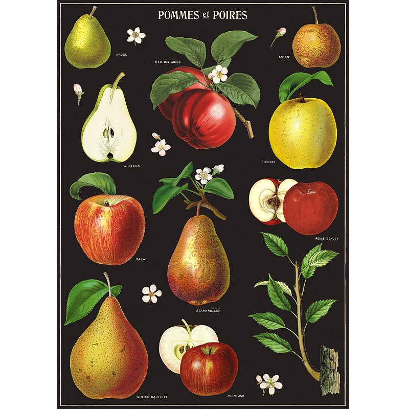 vintage-style poster - apples and pears