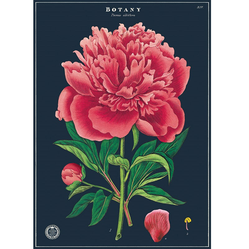 vintage-style poster - peony